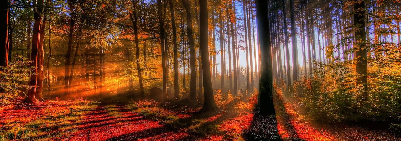 sunny-autumn-scene